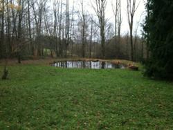 Der Teich zur Wald-Hütte zeigt das enorme Potential der kompletten Anlage