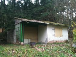 Verlassene Wald-Hütte mit hohem Potential